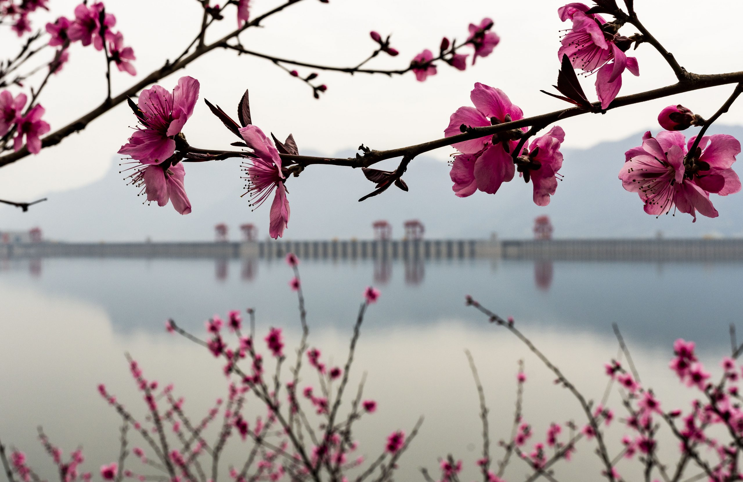 #CHINA-HUBEI-YICHANG-THREE GORGES-SPRING SCENERY (CN)