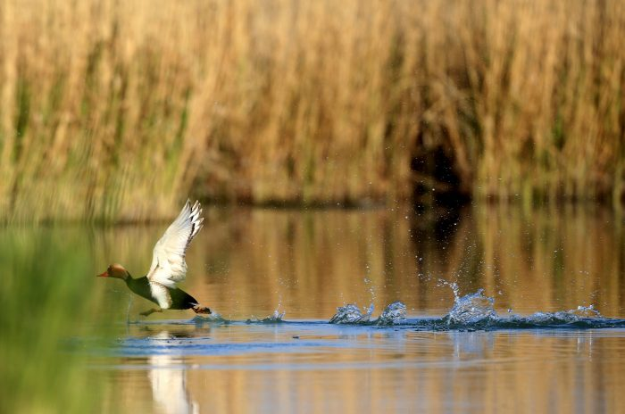 CHINA-NINGXIA-MIGRATORY BIRDS-SHAHU LAKE (CN)