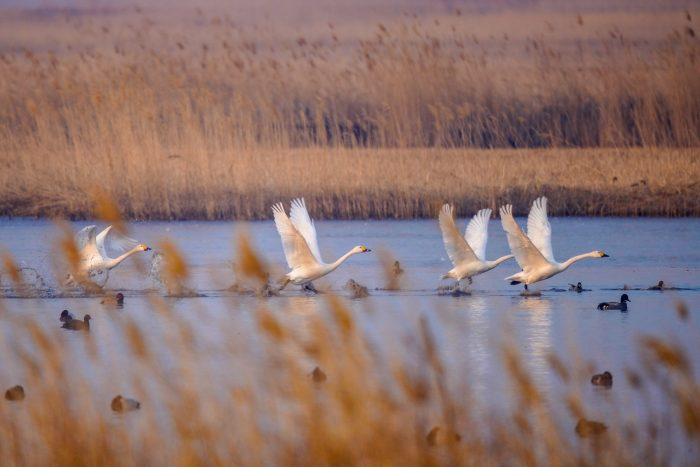 CHINA-JILIN-NATURE RESERVE-MIGRANT BIRDS (CN)