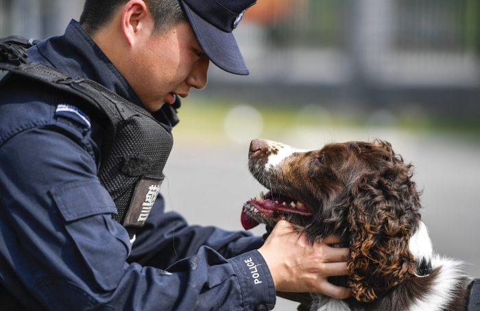 CHINA-JILIN-BAISHAN-BORDER-SNIFFER DOG (CN)