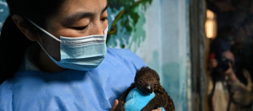CHINA-ANHUI-HEFEI-SLOTH BABY-PUBLIC (CN)