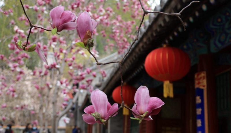 #CHINA-BEIJING-TEMPLE-FLOWERS (CN)