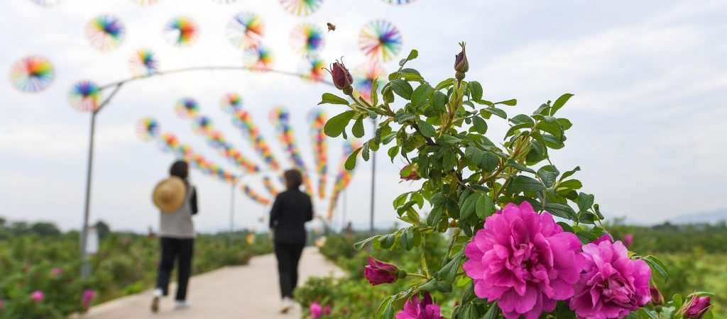 CHINA-ZHEJIANG-CHANGXING-FLOWER-DEVELOPMENT (CN)