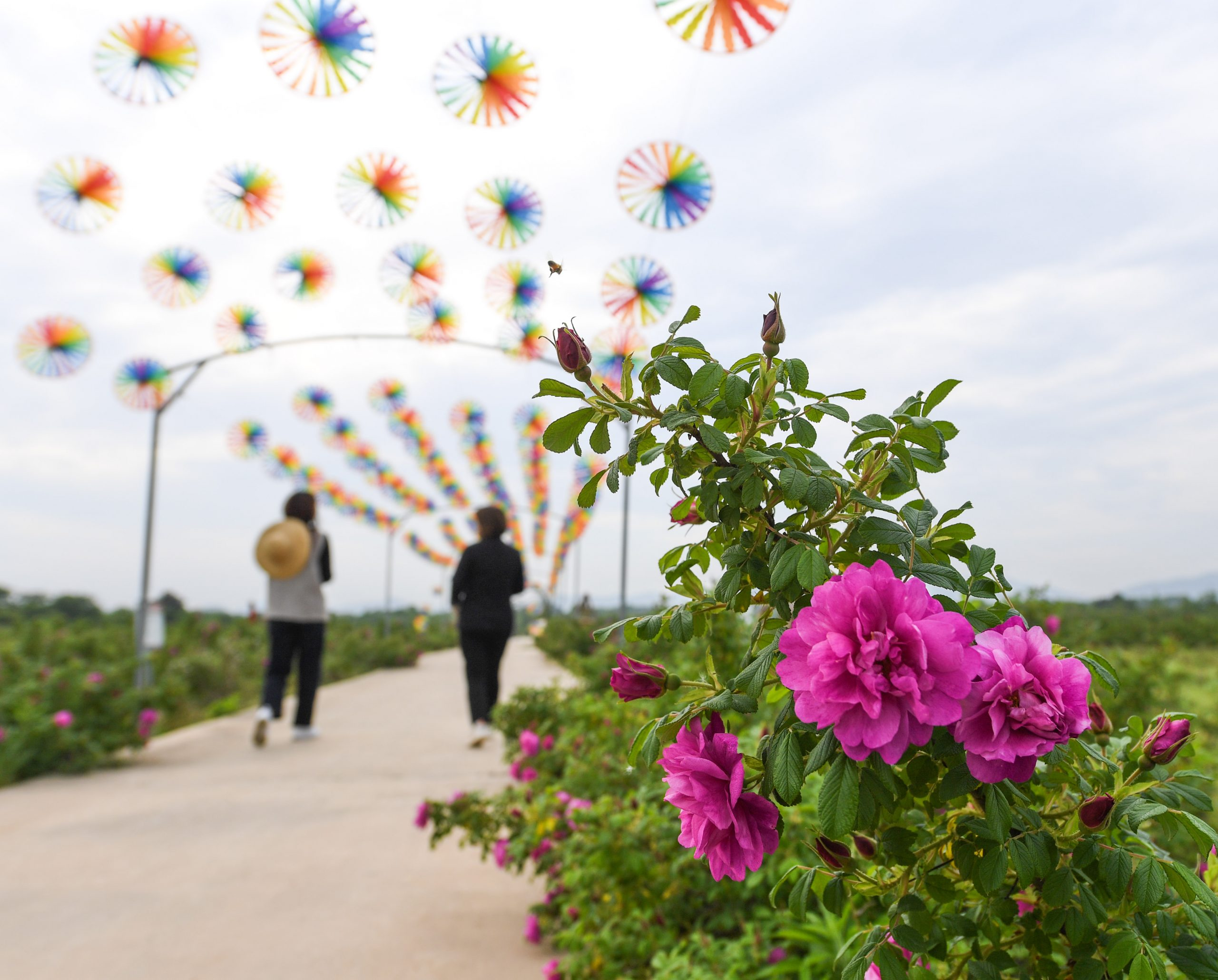 CHINA-ZHEJIANG-CHANGXING-FLOWER-DEVELOPMENT (CN)