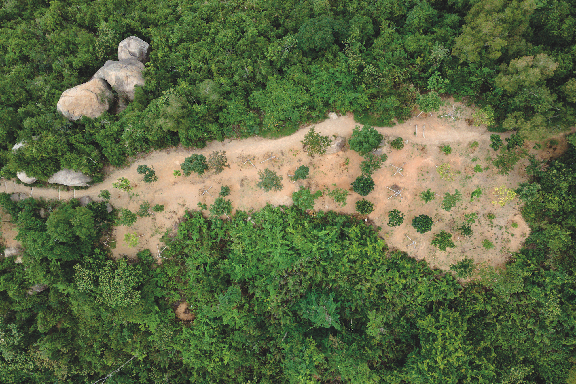 Aerial view of one of the spots IAM replanted trees near the A-Ma Temple in Coloane